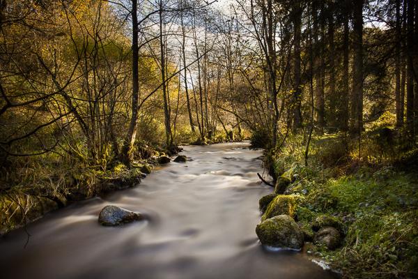 Morvan filé cours d'eau